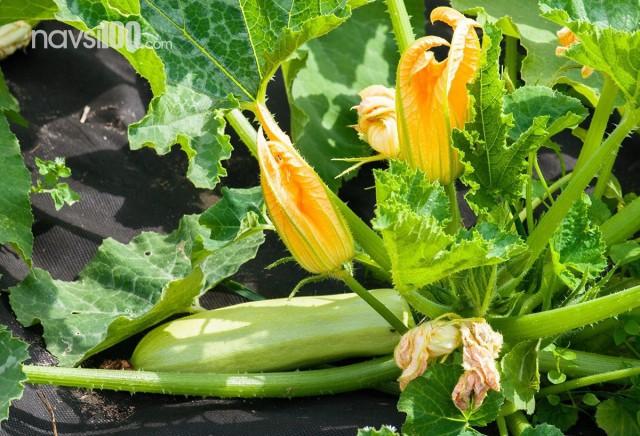Дієтолог назвала овоч, який швидко позбавляє набряків і зайвої ваги