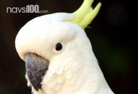 Австрійські науковці стверджують, що папуги розумніші, ніж 3-річні діти